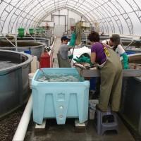 Pisciculture Raymer Aquaculture